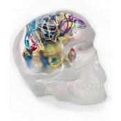 Cranio Grand Talisma